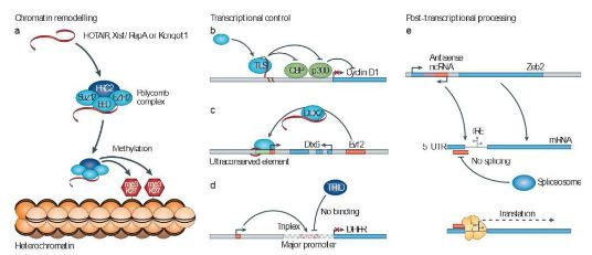 how to make recombinant protein
